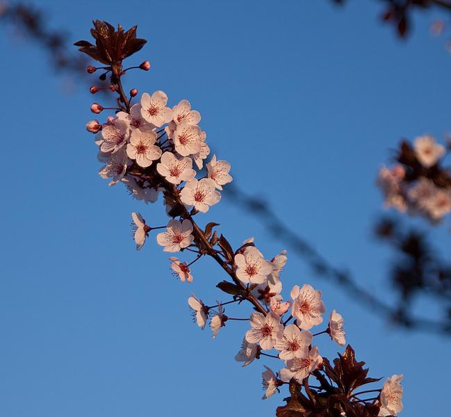 Немного весны