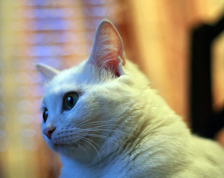 Наша кошка ждет потомство