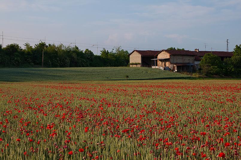 Маковое поле возле Бра