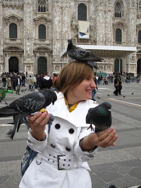 Миланские голуби
