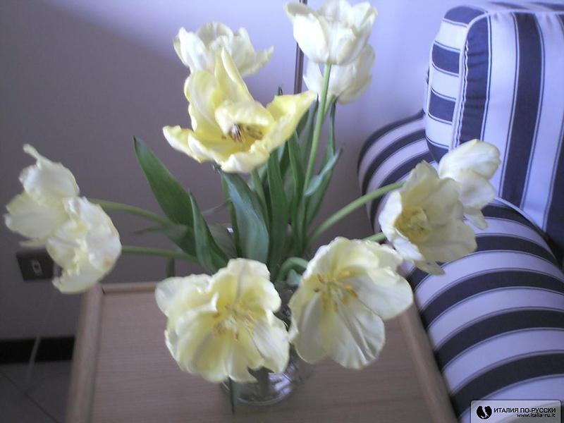 Тюльпаны с медовым запахом