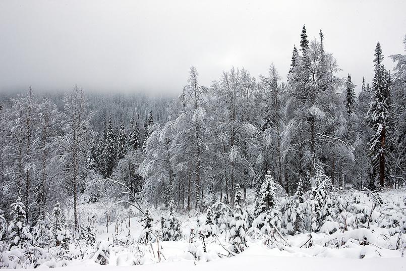 Первый снег. #2