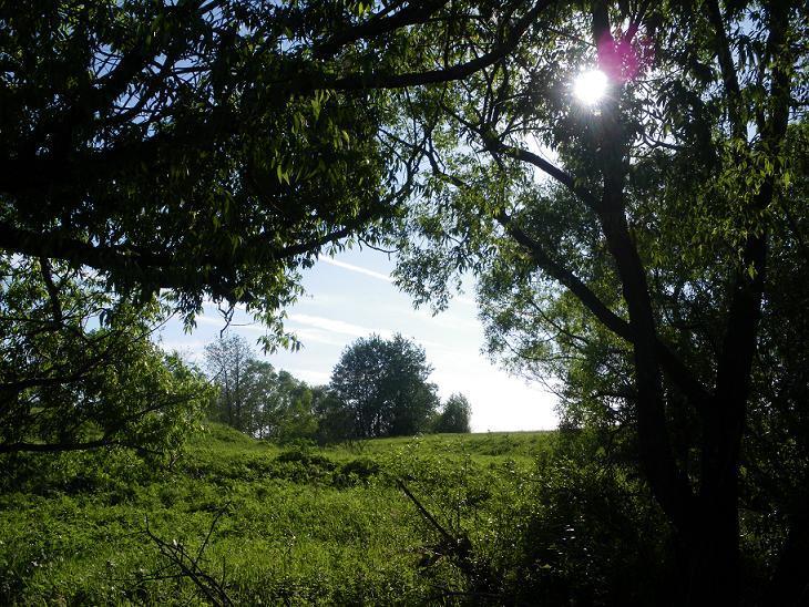 В тени приречных дерев...