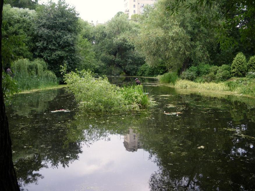 Старый пруд в ботаническом саду мгу