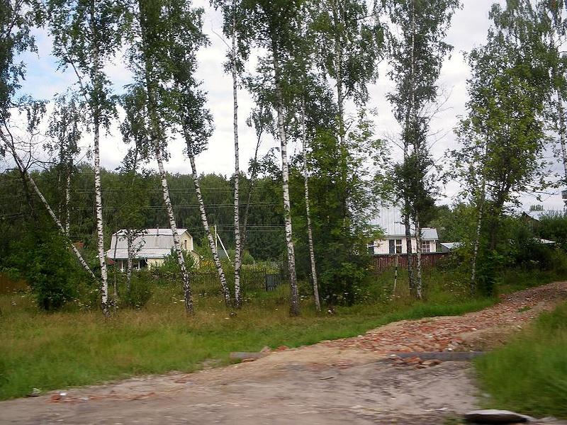 Уходящее лето: березки и дачки