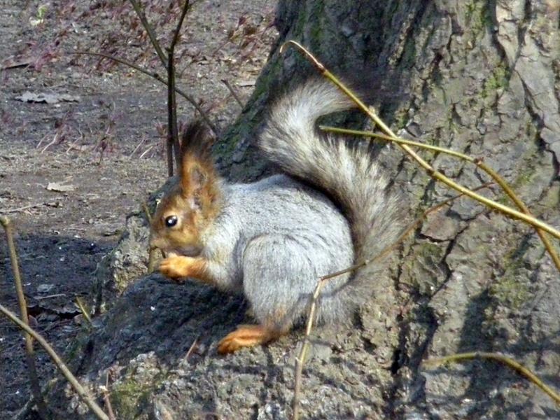 ...Да орешки все грызет...