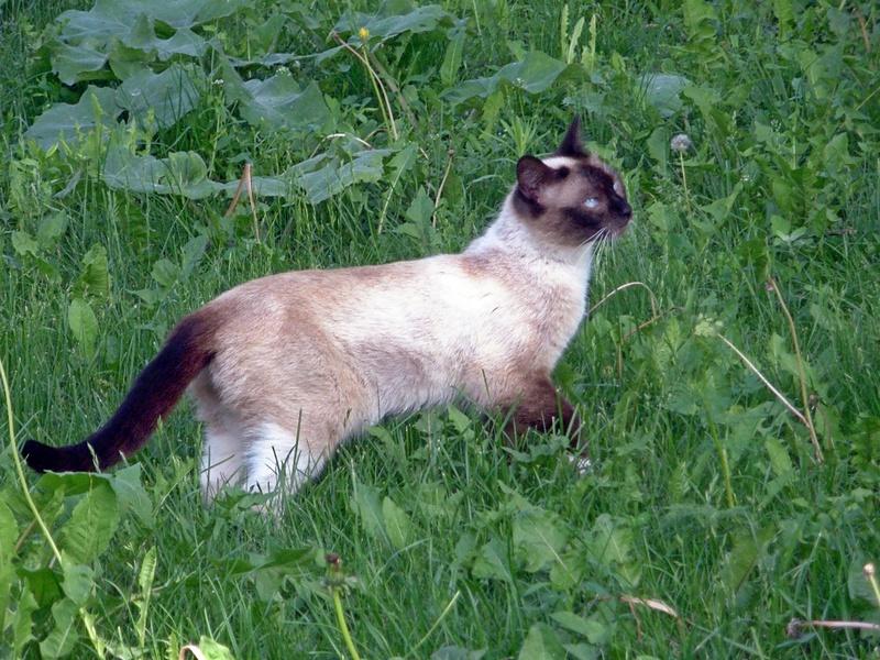Кот,гуляющий сам по себе