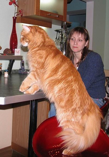 Большой Кот, не фотошоп