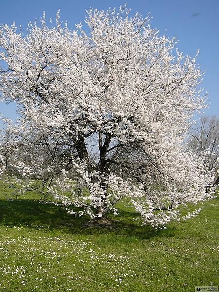 весна в Болонье