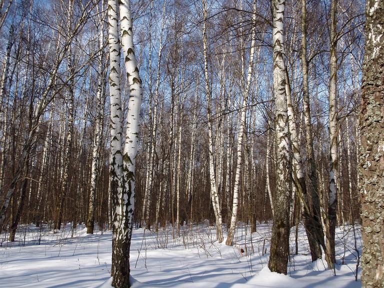 Лес.Середина марта...