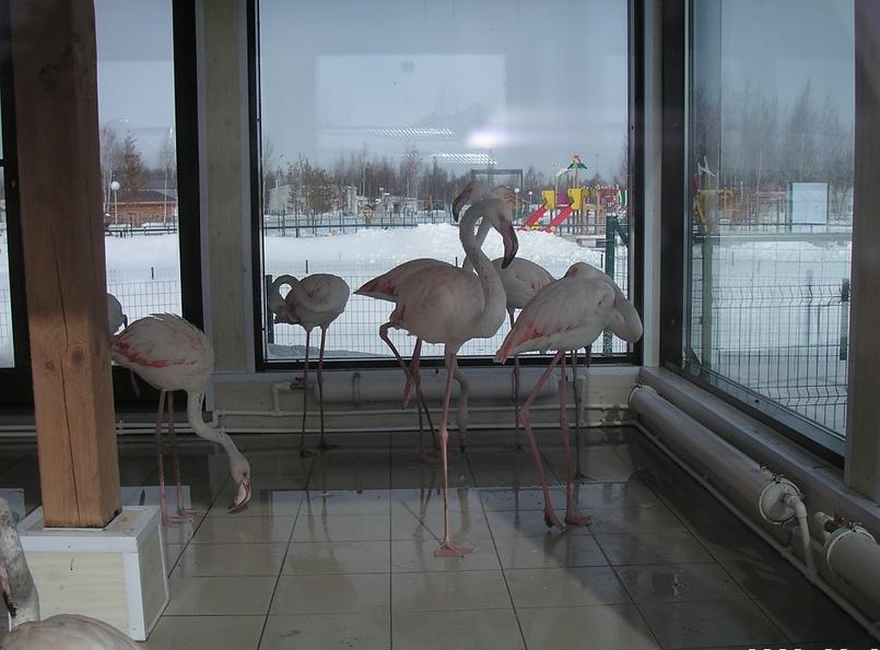 Фламинго и немножко снега :)