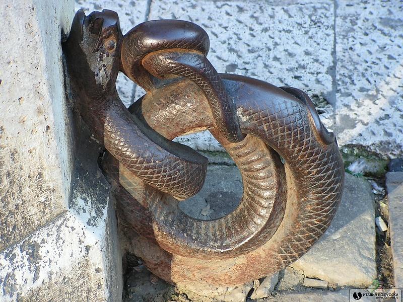 змеюка сиенская