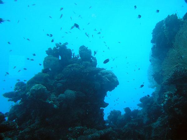 По просьбе Великого Географа(Verdasco), немножко подводного мира к теме О Еилате...