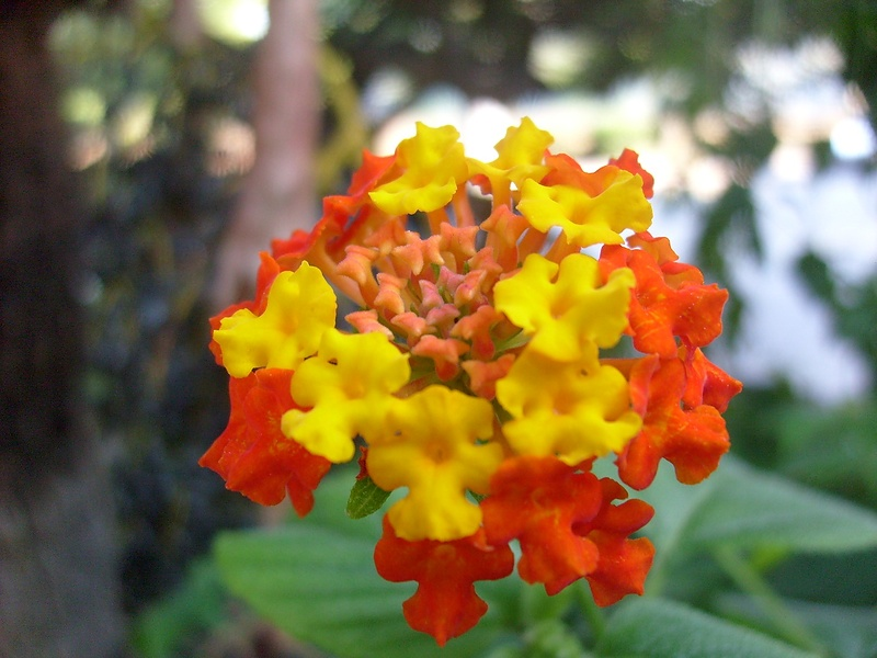 Цветы Калабрии и не только...