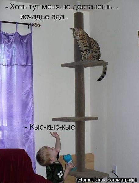 бедный кот ;)