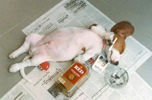 Vita da Cane!  :)