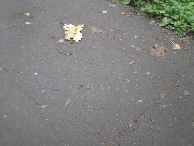 Измайловский парк осень