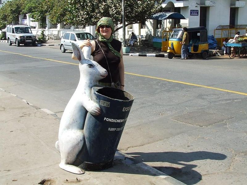 Нещадная эксплуатация кроликов в Индии, без отдыха собирают мусор