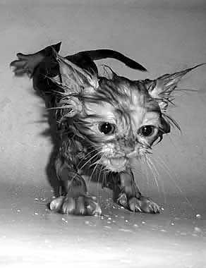 Я мокрый