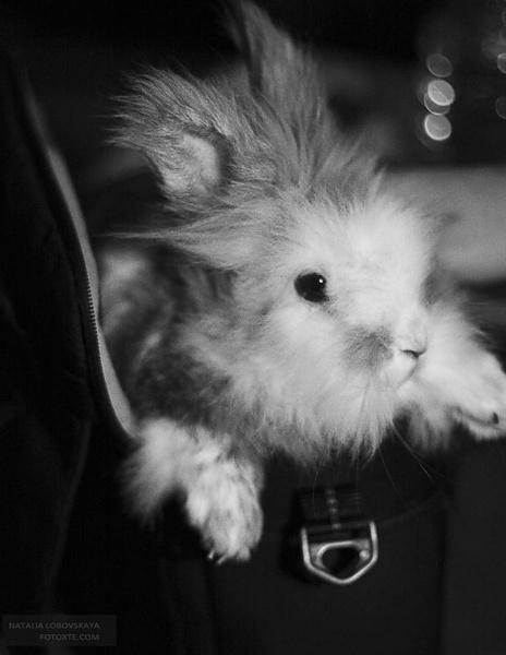 Кролик Банзай
