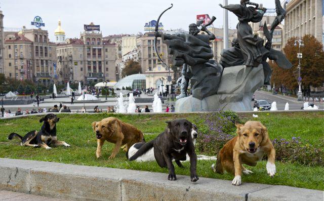 добро пожаловать в Киев