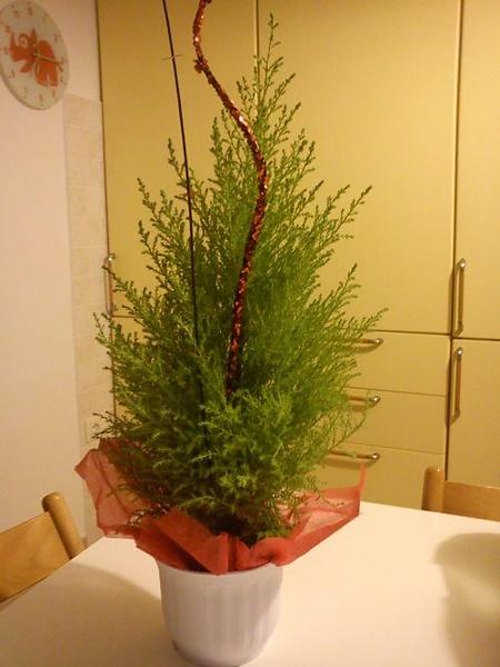 Наше новое дерево для Новой жизни