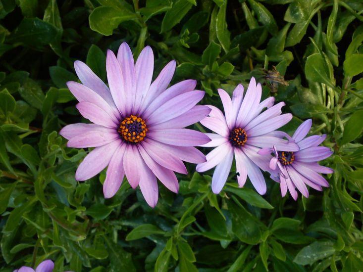 Цветы Сардинии