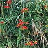 fiori rossi.