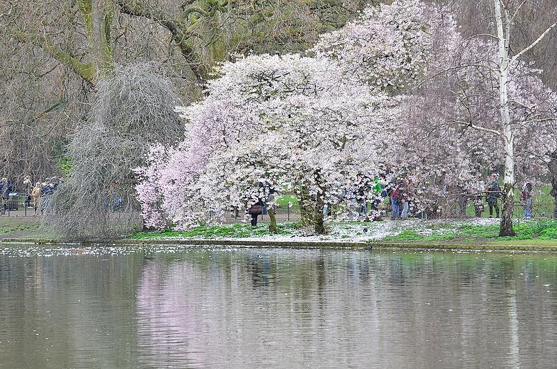 Весна идет , - весне дорогу.....