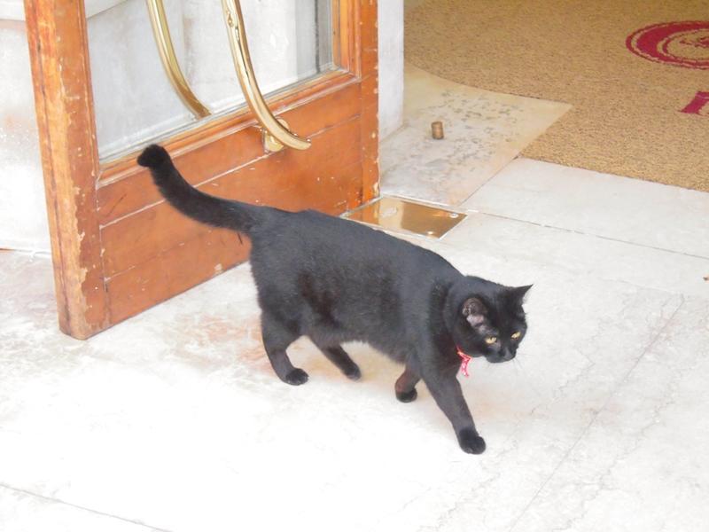 Венецианский кот.