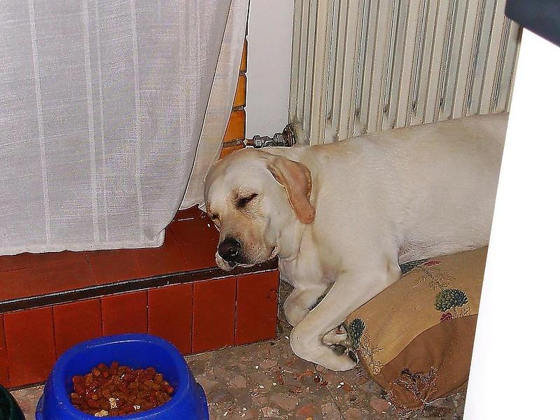 Спят усталые игрушки )))