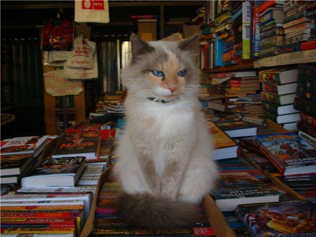 Продавец книг ))
