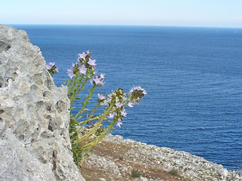 И на камнях растут .... цветы!
