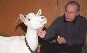 В.В.П. любит животных