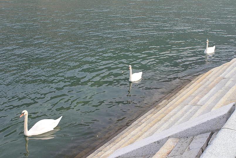 Лебединая тройка