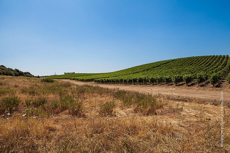 Виноградники Capichera