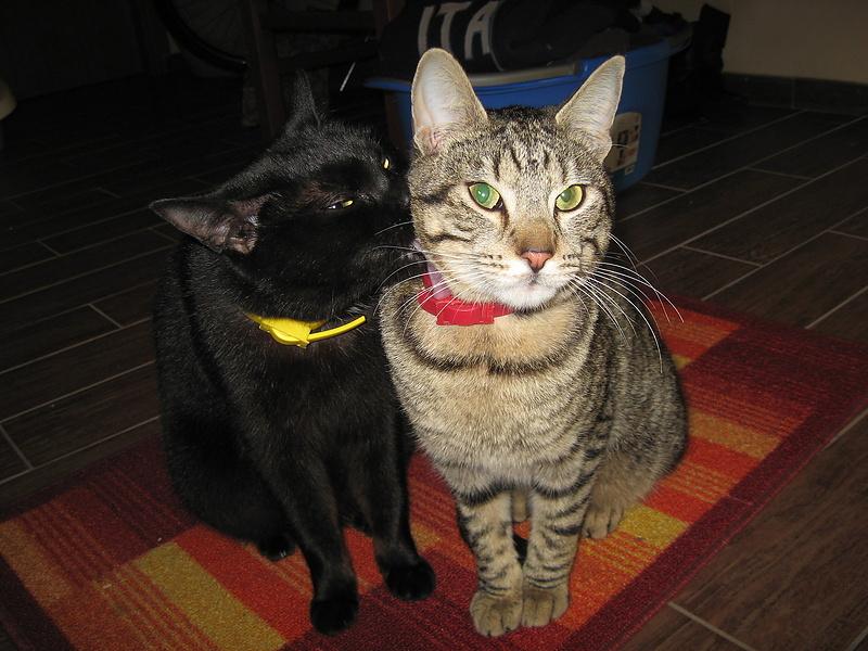 мои коты