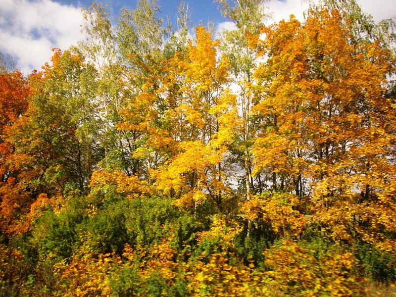 Осень и ее дары