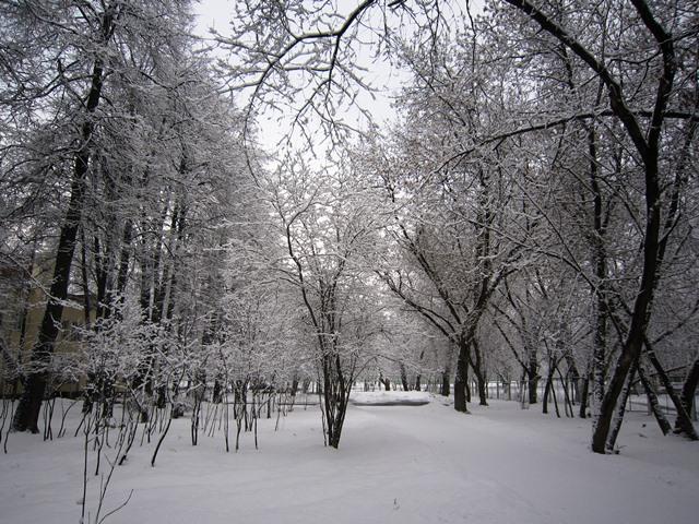 Новогодний подарок природы