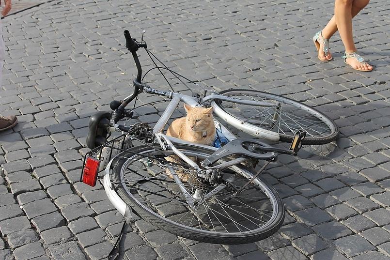 Римский охранный кот