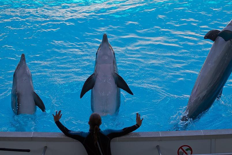 Дрессировщик дельфинов