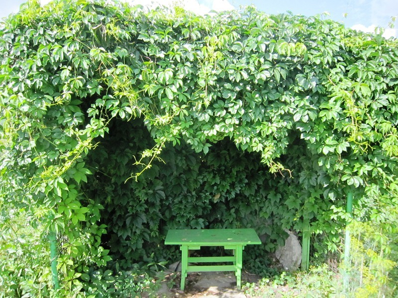 Одинокая скамейка