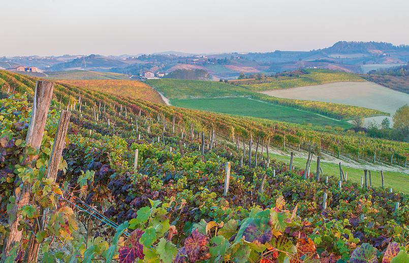 Ланге - виноградники Бароло, между Монфорте и Новелло