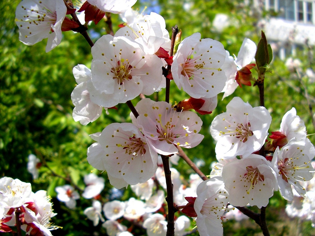 Солнечная погода весной картинки