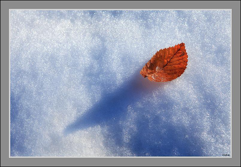 На снегу...