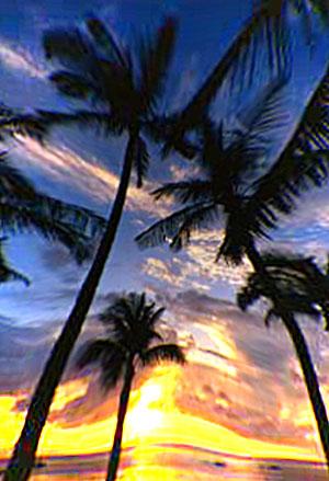 страсть как люблю пальмы