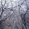 Ледяные кружева