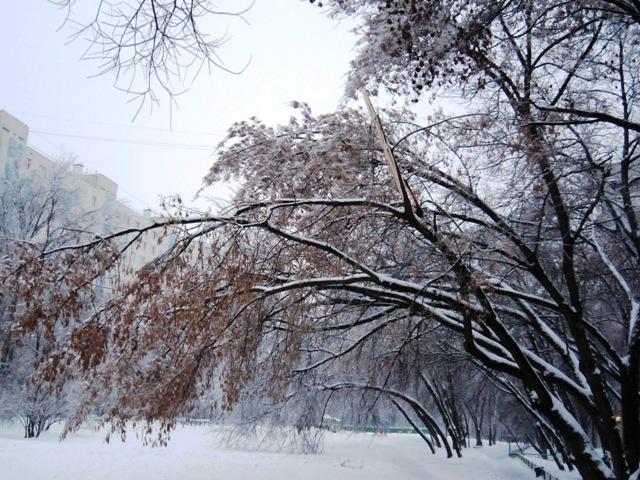 Под тяжким бременем снега и льда...