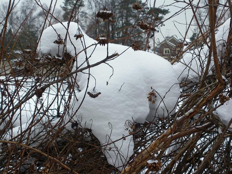 Снежный мишка