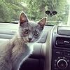 А что это вы тут делаете в моём автомобиле?:-))